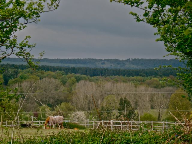 View to the North Downs