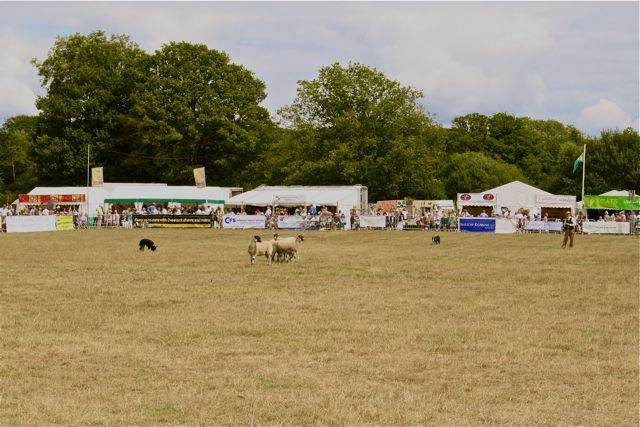 Sheep dog display at the Cranleigh Show