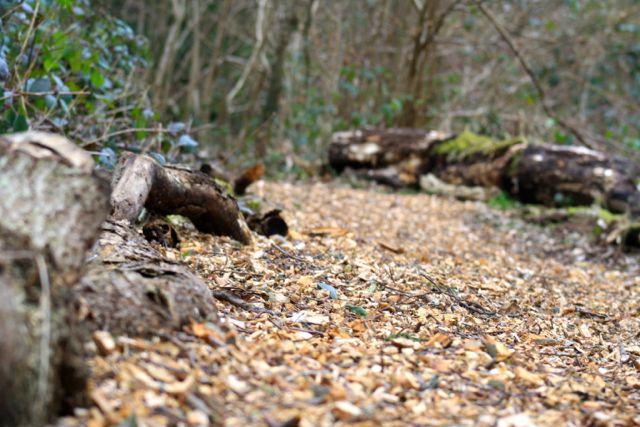 Forest School Path Way