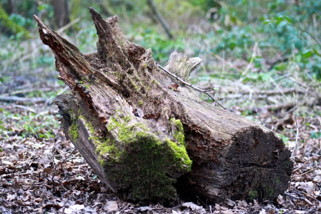 Tree stump for inspecting insects