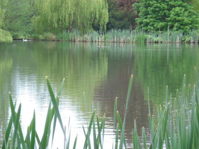The Pond at Woodhill Farmhouse