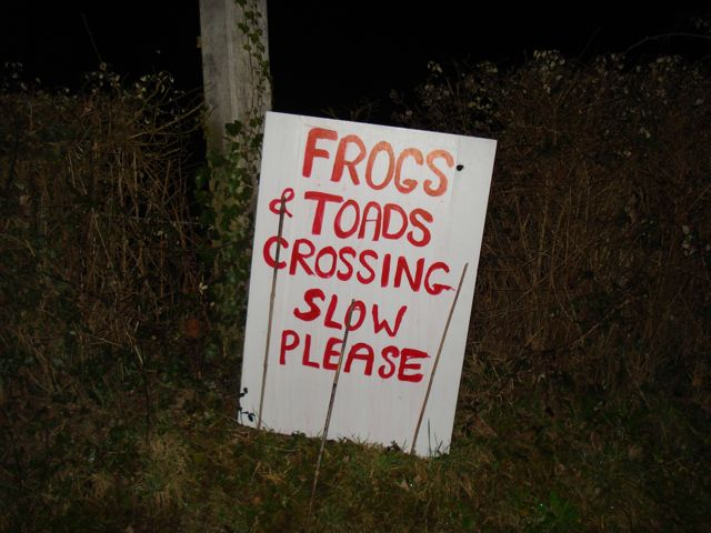 Toads Crossing