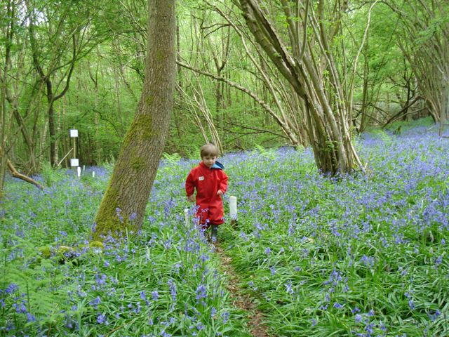 Annabel amongst the Woodland Bluebells