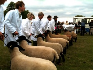 Judging at the county show