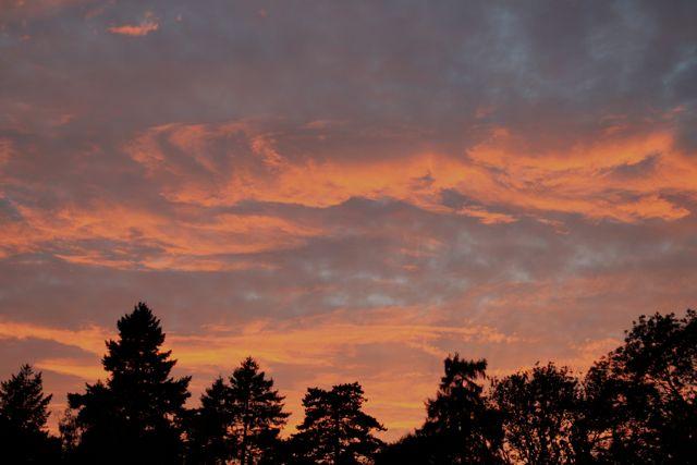 Surrey Hills Sunset