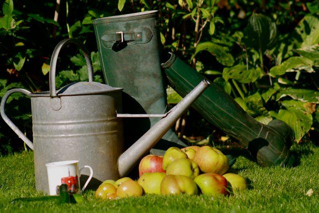 Autunm Harvest