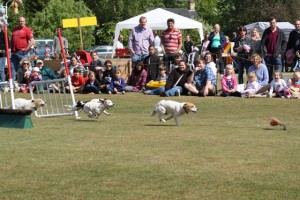 Terrier Racing at Bramley Fete