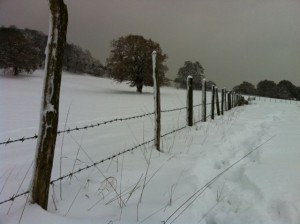 Snow in the Surrey Hills