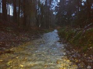 Floods in Winterfold Forest
