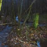 Water rushing through Winterfold Wood
