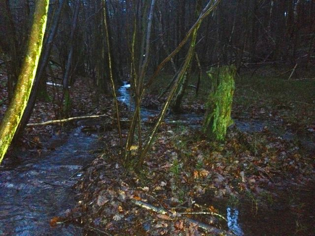 Water rushing through Winterfold Wood